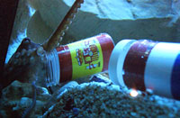 Pic courtesy of Two Oceans Aquarium.