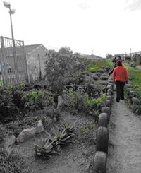 Garden projects brighten up waste ground in Cape Town