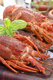 Easy Cooking: lobster