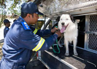 Two specially trained dogs are now helping the City of Cape Town's metal theft unit in their quest to end the costly theft of copper and other non-ferrous metals in the city. (Image: )