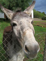 New sanctuary for Cape's donkeys