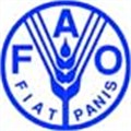 Invest in good food, not junk says FAO