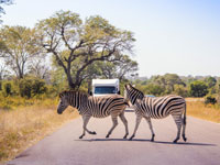 Recommended roads for spotting game in Kruger