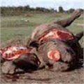 Tanzania fires ministers over anti-poaching abuses