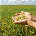 Eastern Cape needs funds for Argentinian soya joint venture