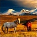 Google's Street View enters Mongolia on horseback