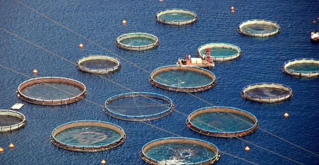 Application for PE fish farm referred back to DEA