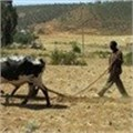Sharp rise in hungry Ethiopians needing aid: UN