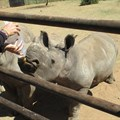 R1.385m allocation to rhino conservation by MyPlanet Rhino Fund