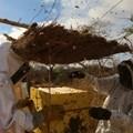 Beehive fences in Kenya fend off elephants