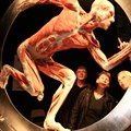 Body Worlds Vital exhibition to be held in Joburg