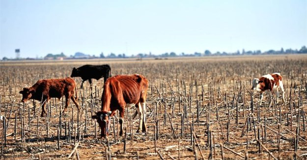Beef production threatened by deepening drought