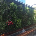 Living wall installed at The Zone @ Rosebank