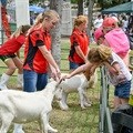 Barking good animal shows at the big Rand Show 2016 - The Rand Show