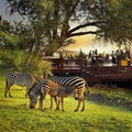 Royal Livingstone - Deck at sunset with zebras