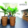 Ambius highlights the importance of indoor plants in honour of International Plant Appreciation Day
