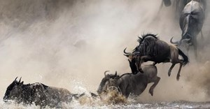 16 reasons why you should see the Great Migration in 2016