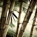 Bamboo: Africa's untapped potential