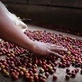 #AfricaMonth: Fairtrade consumers can realise Africa's potential