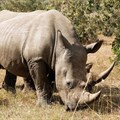 Minister notes rhino horn court judgment