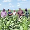 Lambasi Chief Mthuthuzeli Makwedini, Technoserve intern Kamvalethu Hoyi, business advisor Jabulile Sithole, Eastern Cape Rural Development and Agrarian Reform MEC, Mlibo Qobohiyane and Technoserve intern Siyabonga Mbuzwa at a maize plantation in Lambasi. Picture sourced from