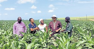 Lambasi Chief Mthuthuzeli Makwedini, Technoserve intern Kamvalethu Hoyi, business advisor Jabulile Sithole, Eastern Cape Rural Development and Agrarian Reform MEC, Mlibo Qobohiyane and Technoserve intern Siyabonga Mbuzwa at a maize plantation in Lambasi. Picture sourced from
