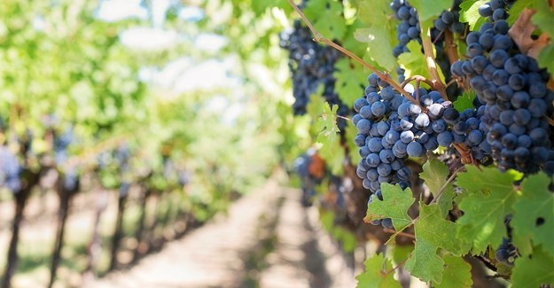 #weeklywinewrap: Smart Agri climate change action plan addresses extreme weather events
