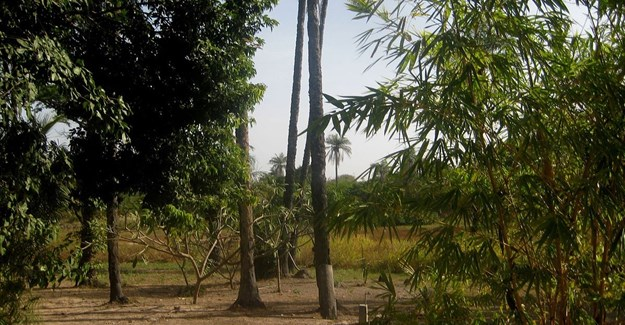Senegal's southern forests may disappear by 2018: ecologist