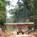 Roads built for logging in the Congo Basin have implications for forest management. Fritz Kleinschroth