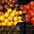 GALA release new videos on global food advertising