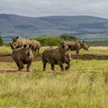 Collaboration to benefit wildlife of Tala Game Reserve
