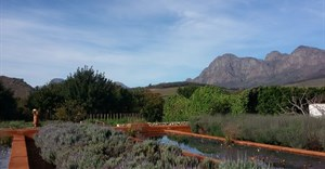 The bounty of Babylonstoren