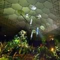 Creating a greener urban jungle