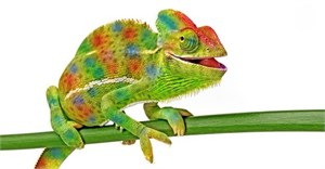 The value of chameleon workers