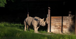 Rhino transported from Czech Republic to Tanzanian sanctuary