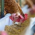 Country Bird set to block Sovereign's BEE scheme