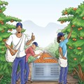 First Comic Contracts introduced to ClemenGold fruit-pickers