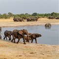 Biodiversity plunges below 'safe' levels: study