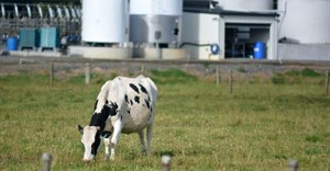 Raw milk production increases year on year