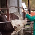 Myths and Facts: addressing the use of antibiotics in food-producing animals