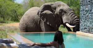 10 reasons to visit the Phinda Private Game Reserve