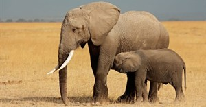 'Wildlife is worth more alive than dead' - UNEP deputy head