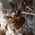 Compass Group commits to cage-free eggs only in global supply chain