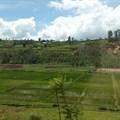 Fanny Schertzer via  - Rwanda, rice fields