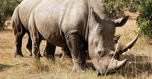 #CITES: New plan to prioritise rhino population
