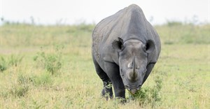 #CITES: 'Disrupt wildlife trade'
