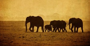 Stop the slaughter of African elephants by banning the ivory trade for good