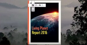 Humanity decimating planetary wildlife: report