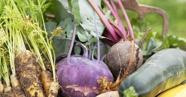 Organic farming gets a bad rap - why it shouldn't