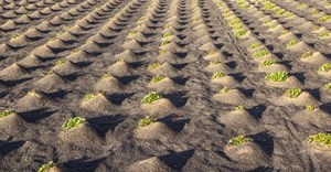 Uncertain times call for smart moves - the promise of agro-alliance